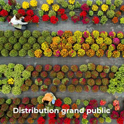 Distribution grand public